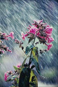 Flowerstorm